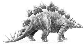 Самый безмозглый. Стегозавр