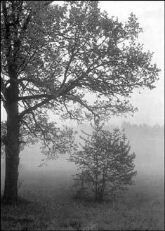 Картинки природы паустовского