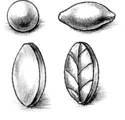 Исходная форма – цилиндр